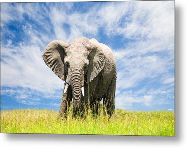 Free African Elephant Metal Print by 1001slide