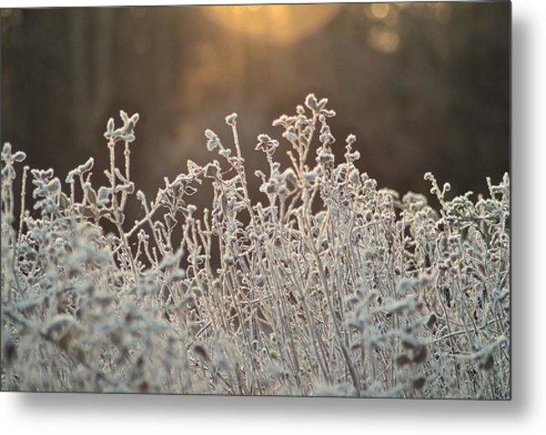 Freezing Cold Metal Print by Karen Grist