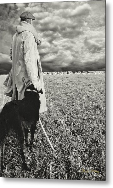 French Shepherd - B W Metal Print