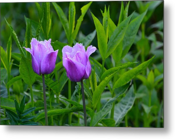 French Tulips Metal Print