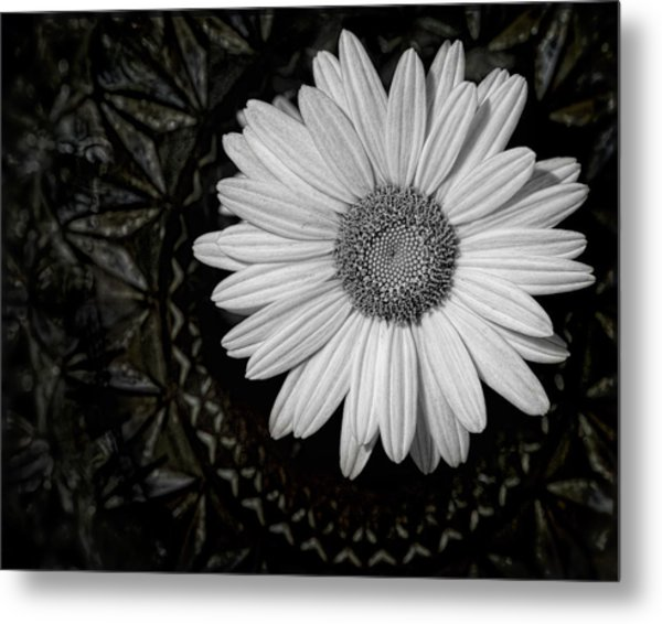 Metal Print featuring the photograph Fresh Cut by Kristi Swift