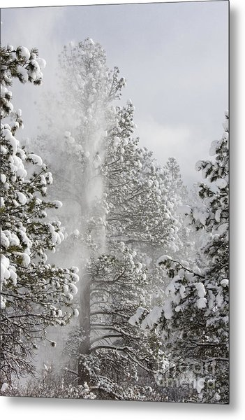 Fresh Snow Metal Print