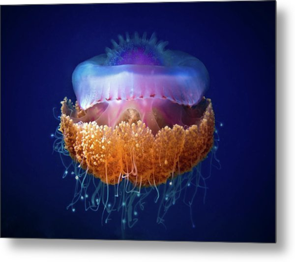 Fried Egg Jellyfish Metal Print