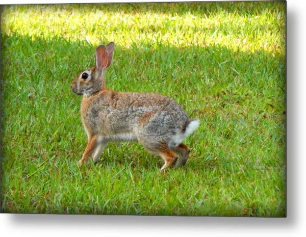 Friendly Rabbit I Metal Print by Lynn Griffin