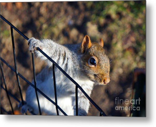 Friendly Squirrel Metal Print