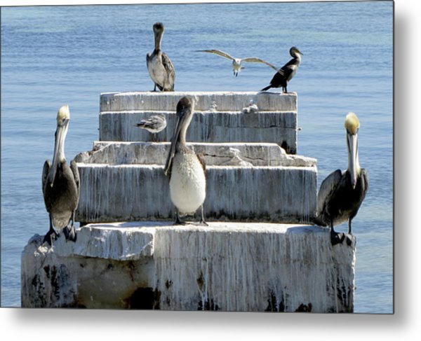Pelican Friends Metal Print