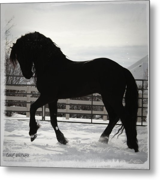 Friesian Play Metal Print
