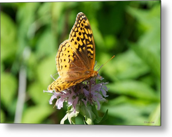 Frittillary And Pink Bee Balm Metal Print