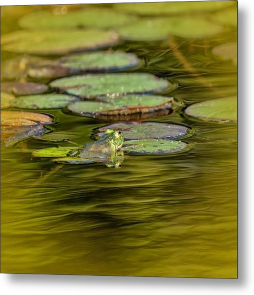 Frog And Lily Pad Metal Print