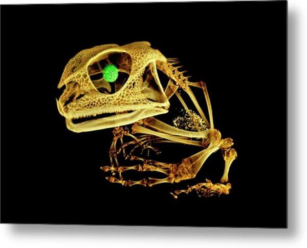 Frog Metal Print by Dan Sykes/natural History Museum, London