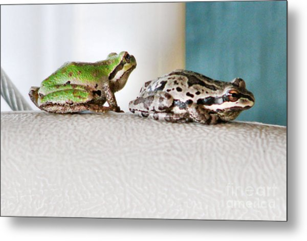 Frog Flatulence - A Case Study Metal Print