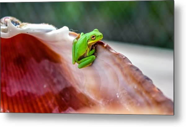 Frog In A Cockle Metal Print