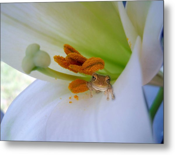 Frog In The Lily Metal Print