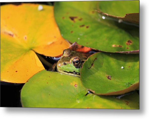 Frog Pond 3 Metal Print