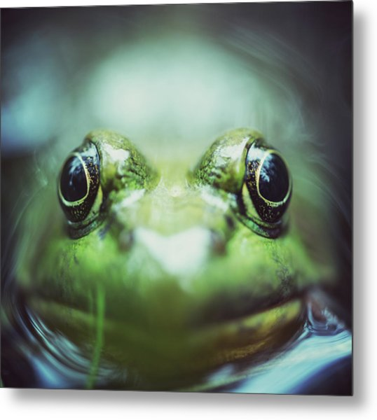 Frogs Level Metal Print by Shaunl