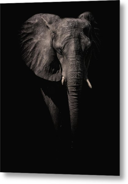 From The Darkness Metal Print