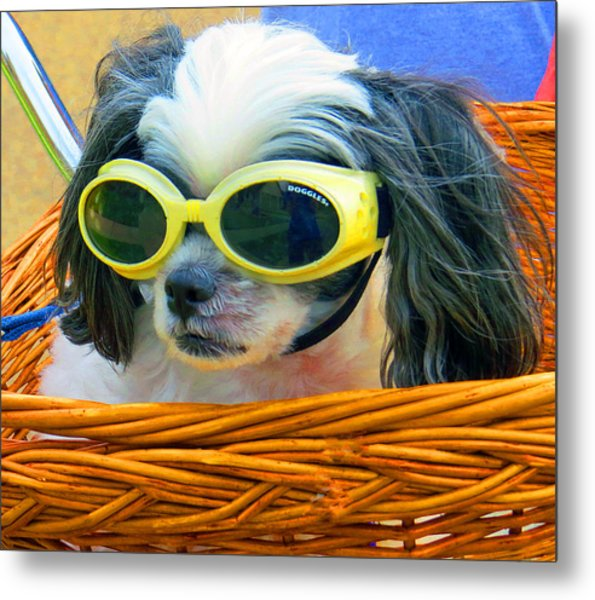 Front Seat Driver - Puppy Mania Metal Print