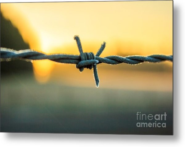 Frost On Barbed Wire At Sunrise Metal Print