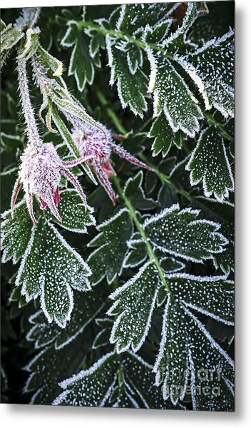Frost On Plants In Late Fall Metal Print