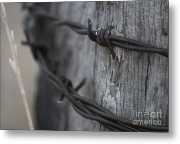 Frost On The Wire Metal Print