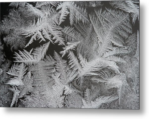 Frost Patterns Metal Print by Carolyn Reinhart