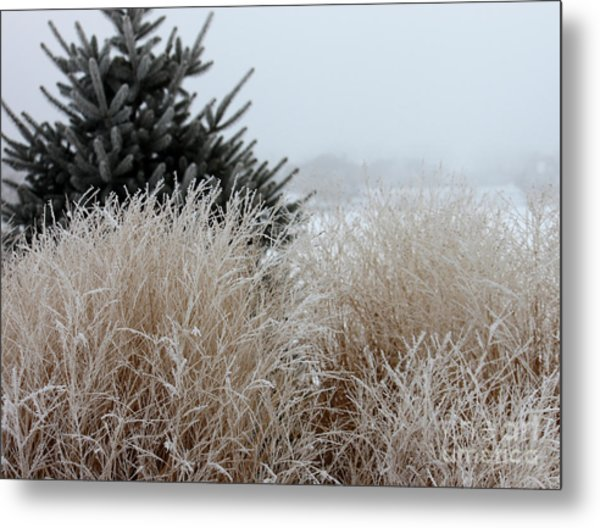 Frosted Grasses Metal Print