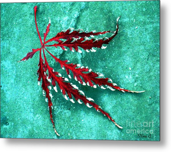 Frosted Japanese Maple Metal Print