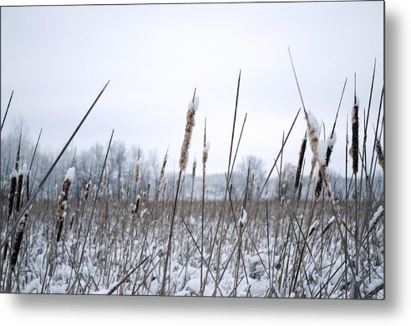 Frosty Cattails Metal Print