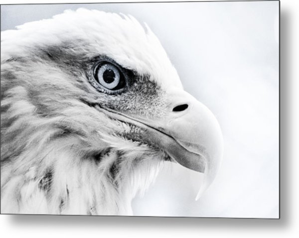 Frosty Eagle Metal Print