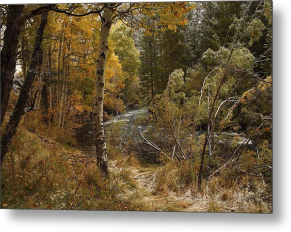 Frosty Fall  Morning Metal Print