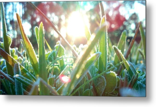 Frosty Flare Metal Print