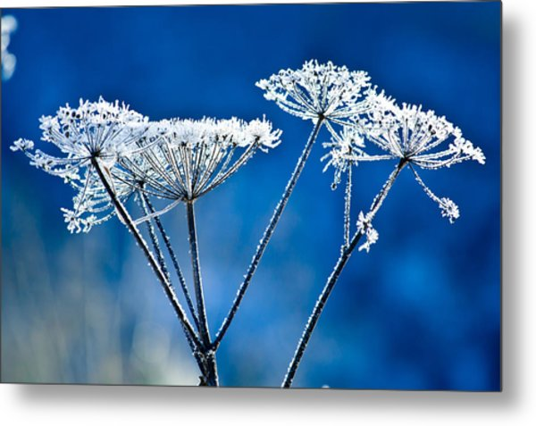 Frosty Light Metal Print