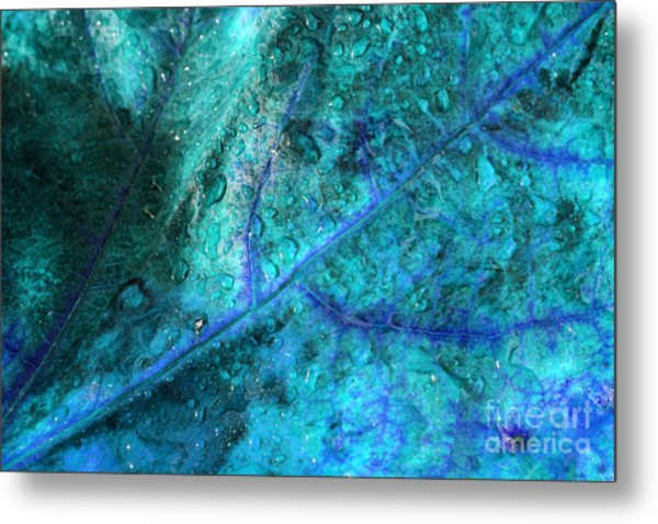 Frosty Morning Metal Print by Angela Bruno