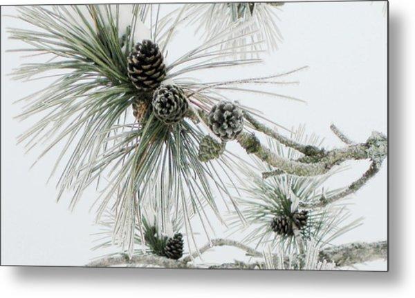 Frosty Pine Cones Metal Print by Carolyn Reinhart