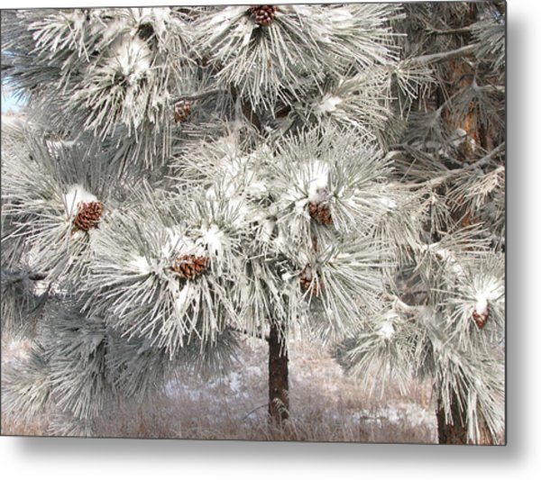 Frosty Pinetree Metal Print by Steven Parker