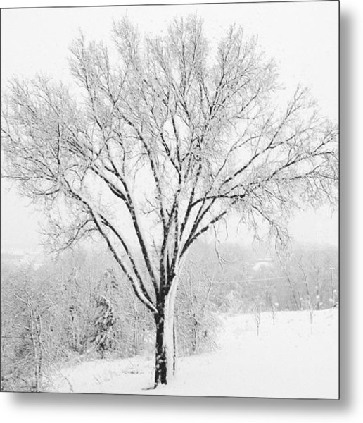 Frozen Elm In Snow Metal Print