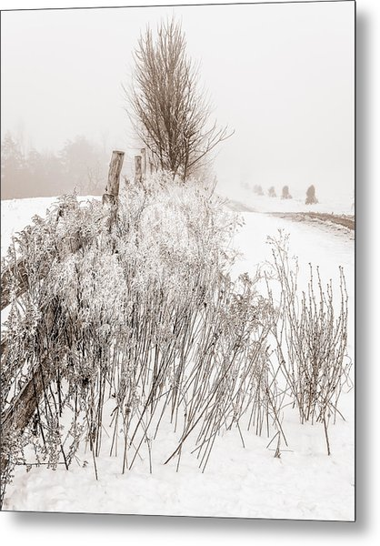 Frozen Fog On A Hedgerow - Bw Metal Print