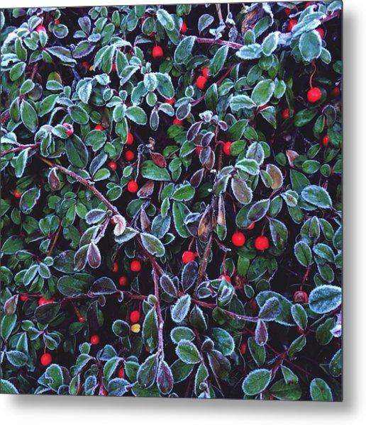 Frozen Fruit Tree Metal Print by Romy Lahoud / Eyeem