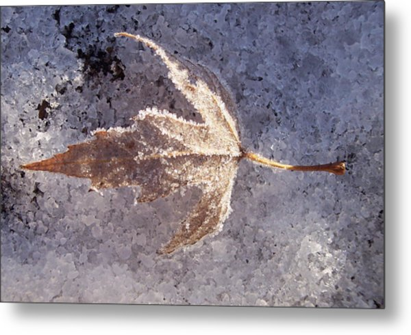 Frozen Leaf Metal Print