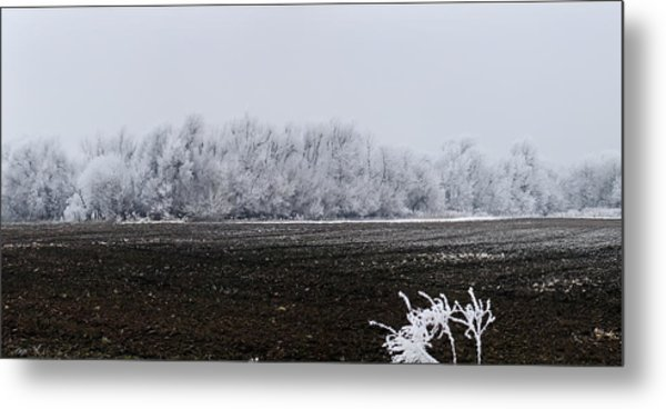 Frozen Possibilities Metal Print