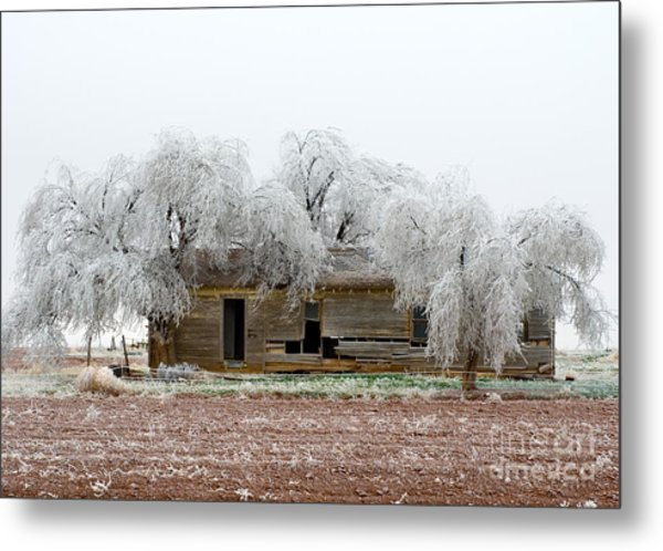 Frozen Trees And Shack Metal Print by Mae Wertz