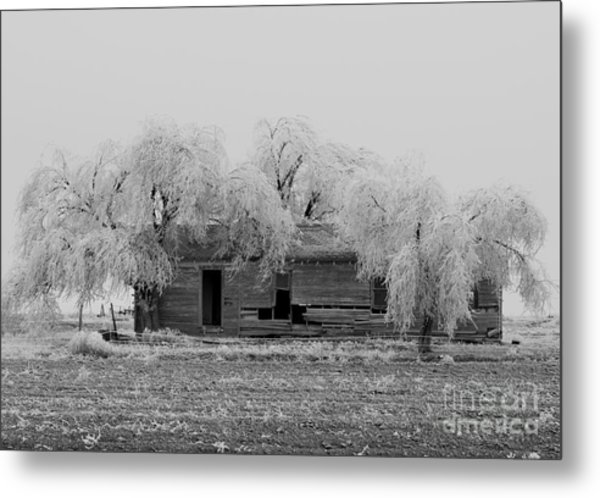 Frozen Trees In Black And White Metal Print by Mae Wertz