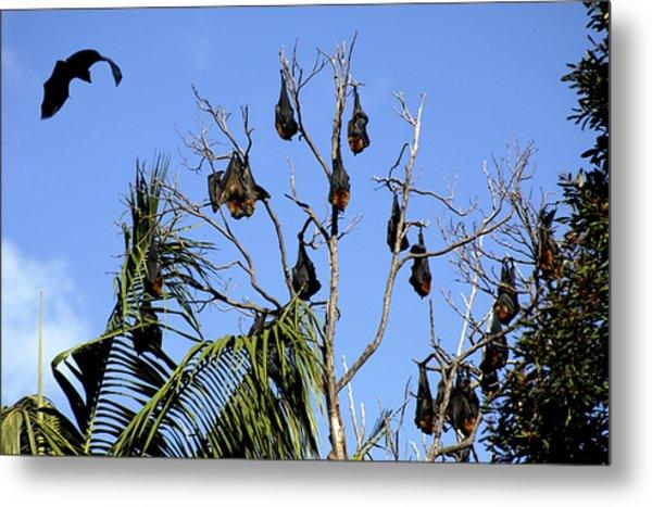 Fruit Bats Metal Print