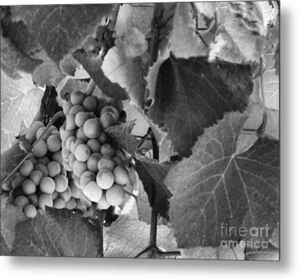 Fruit -grapes In Black And White - Luther Fine Art Metal Print
