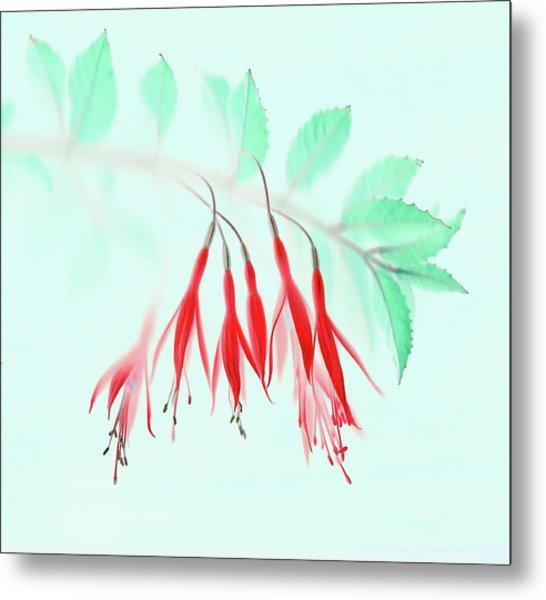 Fuchsia Metal Print