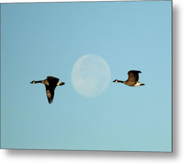 Full Moon Geese Metal Print