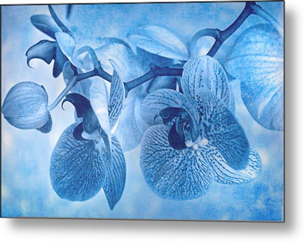 Full Moon Orchids Metal Print