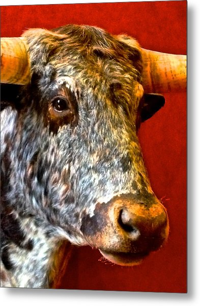 Full Of Bull Metal Print