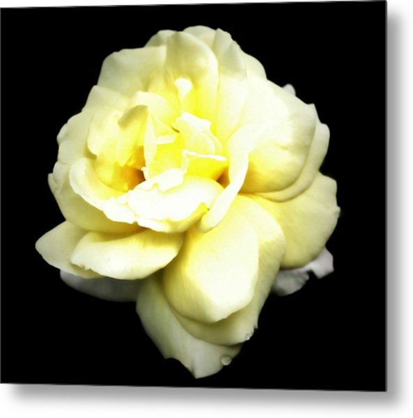 Fully Bloomed Metal Print by Cathie Tyler