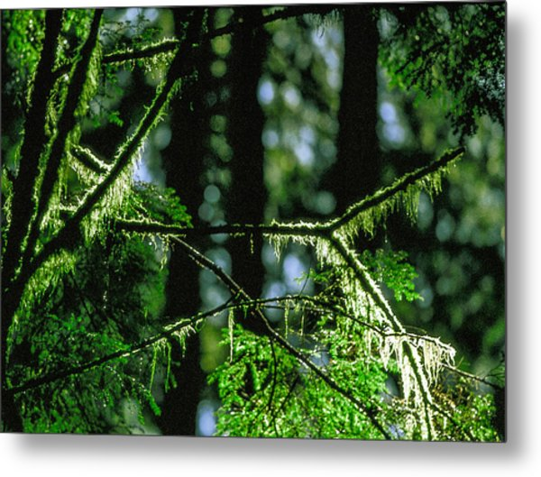 Furry Branches Metal Print by Kim Lessel